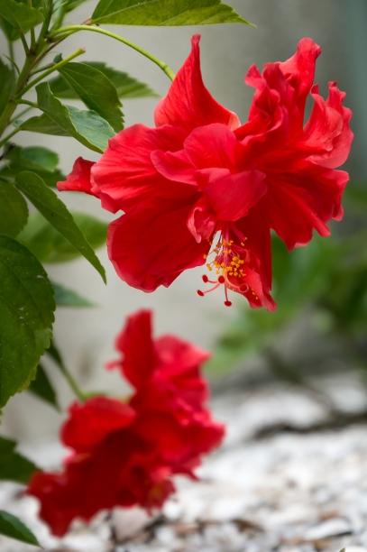 gardenia-2-1-of-1-12