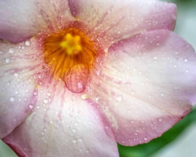 pink flower-