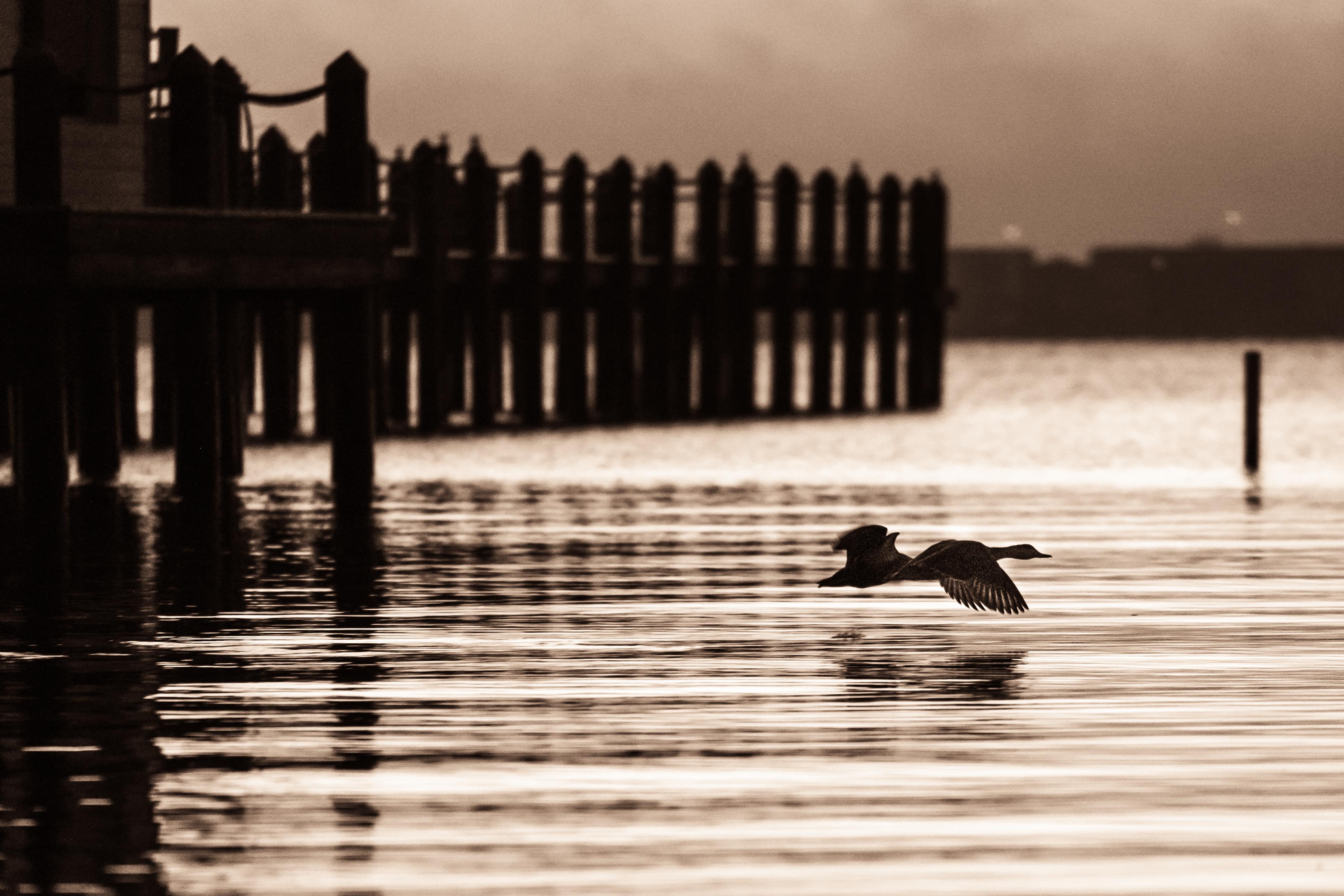 pc harbor-