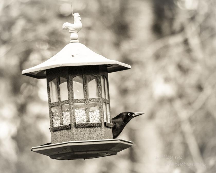 birdfeeder-wm