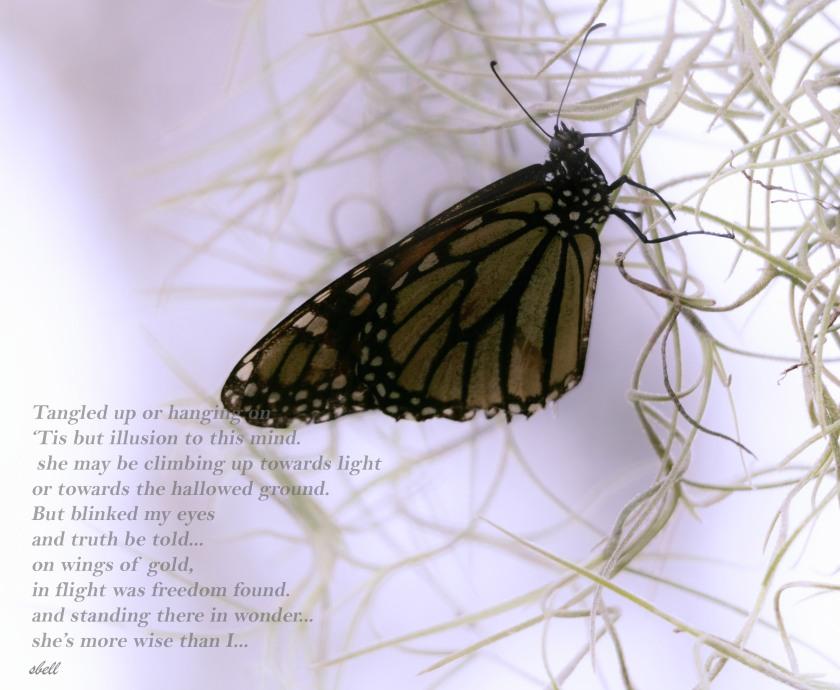 butterfly--2poem